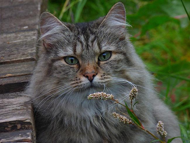 hoeveel-aandacht-heeft-een-kat-nodig